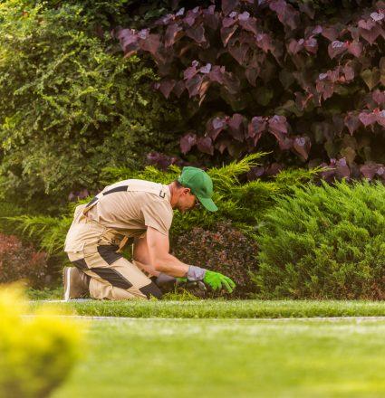 Caucasian Gardener in His 40s Weeding Large Beautiful Gardener
