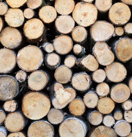 Closeup of cut firewood, natural wood background